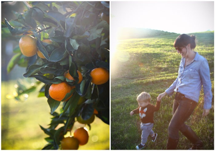 food drink california  Tis the season: Mandarins at Millers Citrus Grove