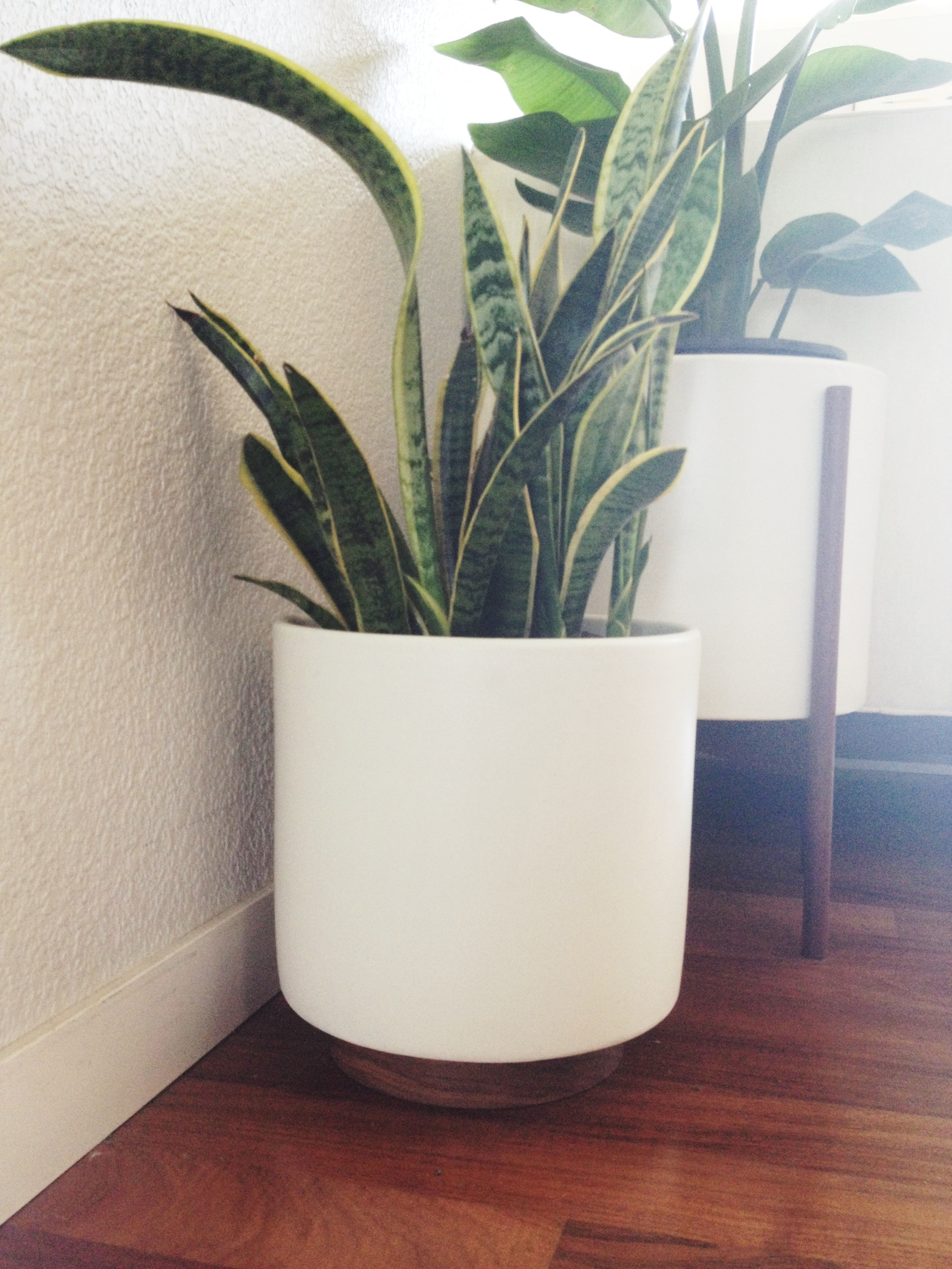 home  Case Study Pots and Snake plants