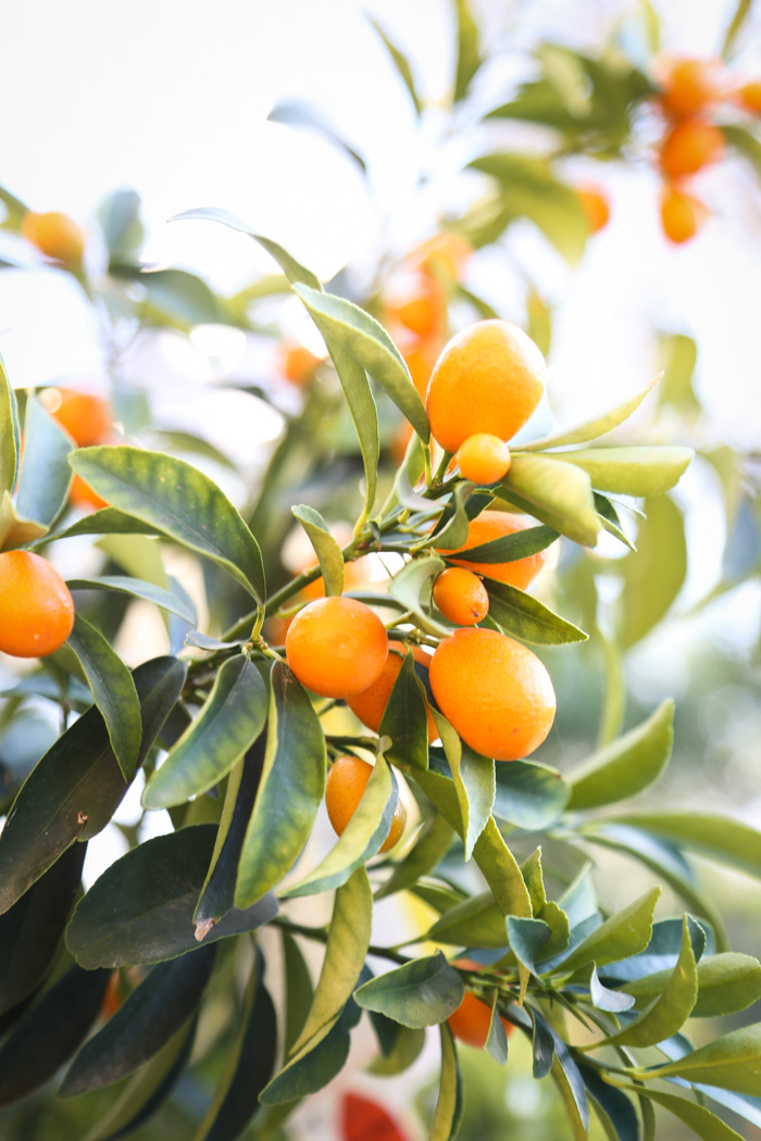 Cooking with Kumquats