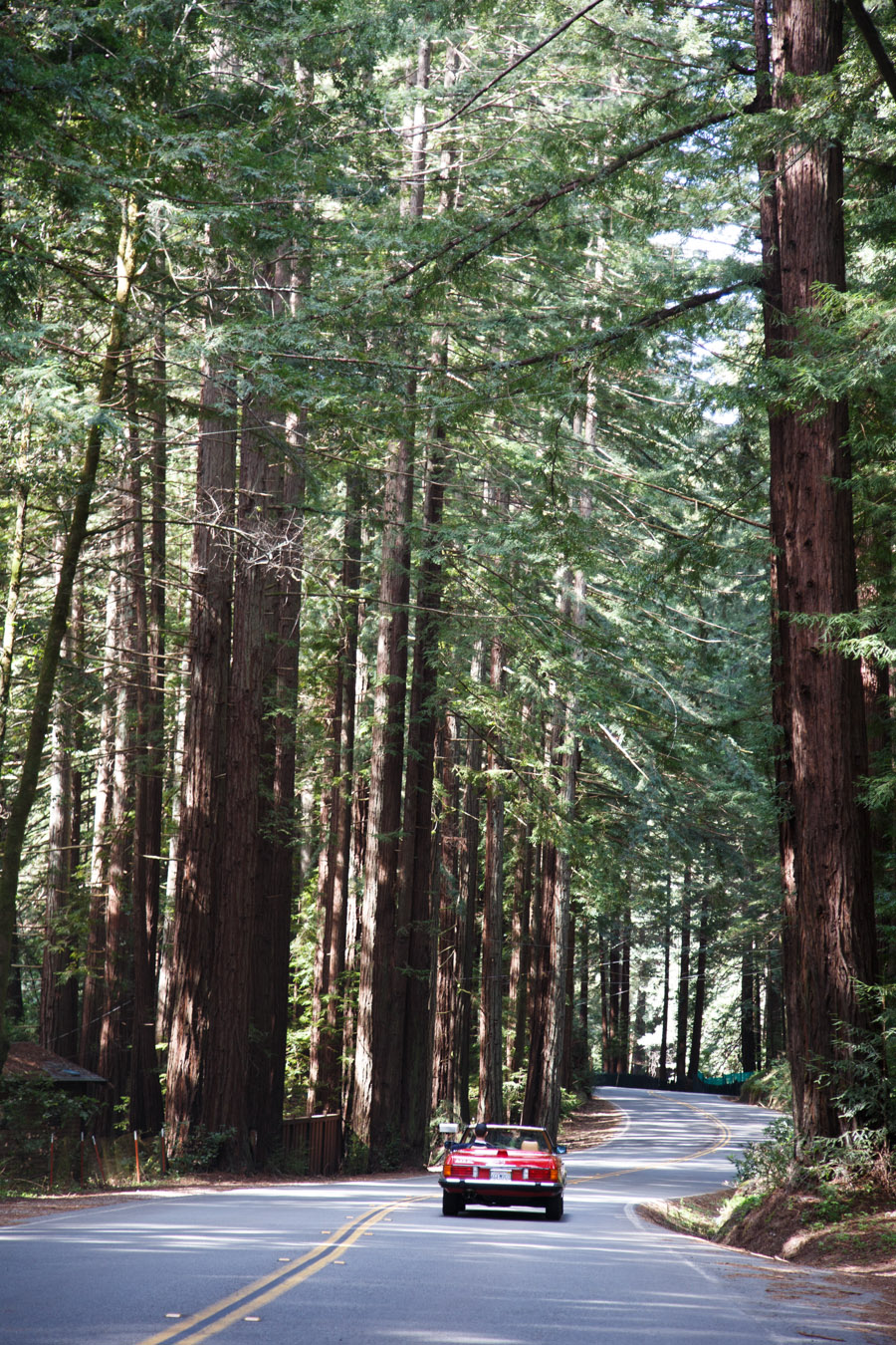 travel  Day Trip: Point Reyes & Tomales Bay