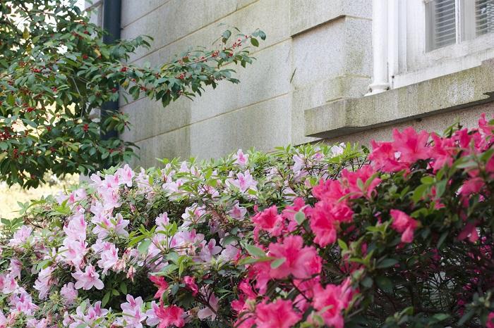5 Things: A Local's Guide to Savannah, Georgia